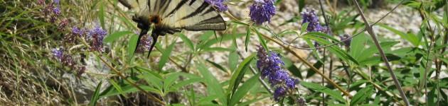 Flora und Fauna (4)
